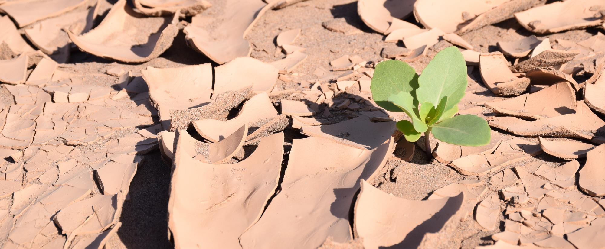 Un voyage au Maroc, en conscience ! Et CIPA tout…