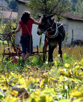 Retour vers le nomadisme
